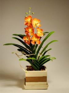 фото, орхидея