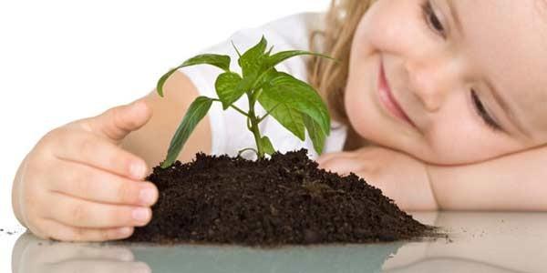 здоровье, комнатные, растения